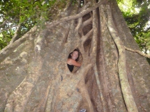 6 meters high inside the 'hollow tree', Monteverde, Costa Rica