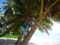 Climbing coconut trees to get me some lunch! Cook Islands