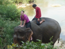 Elephant bathing, Luang Prabang, Laos