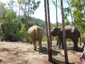 elephant sanctuary 009