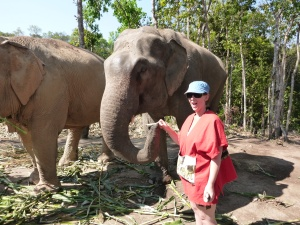 elephant sanctuary 017