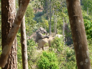 elephant sanctuary 094